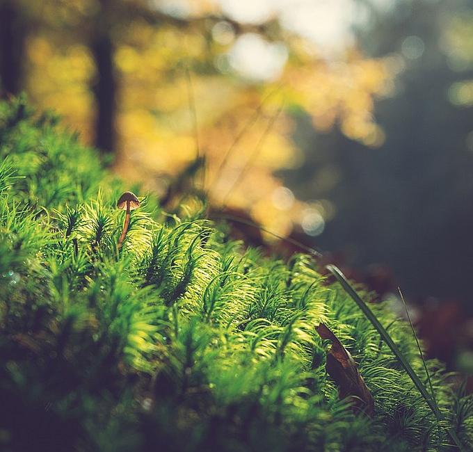 Fotografie in der Natur