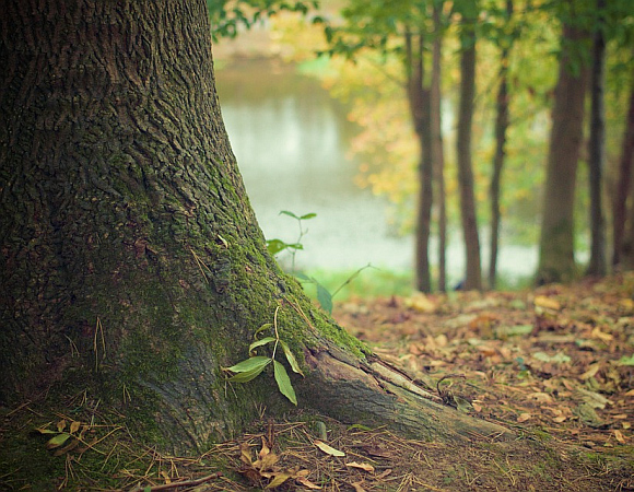 Was wir suchen Grundfläche Wald Wiese