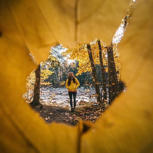 Wildnis Erlebnisse als Therapie