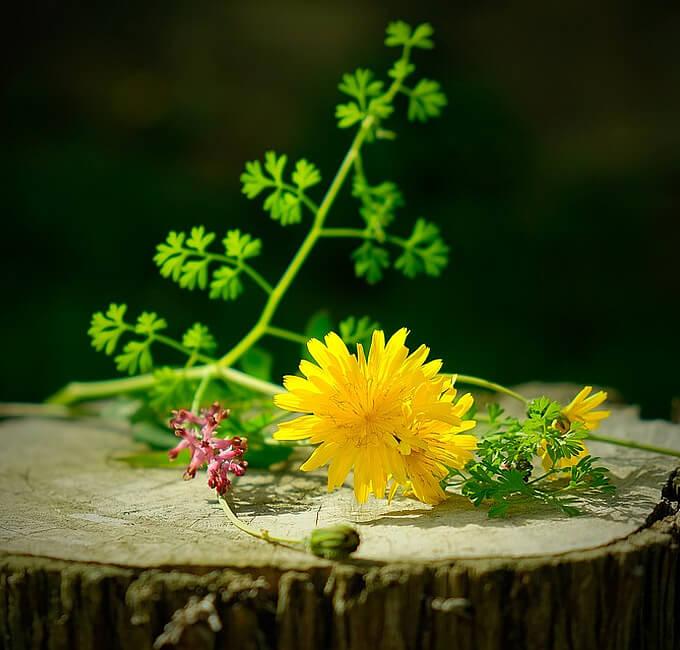 Wildnispflanzen entdecken
